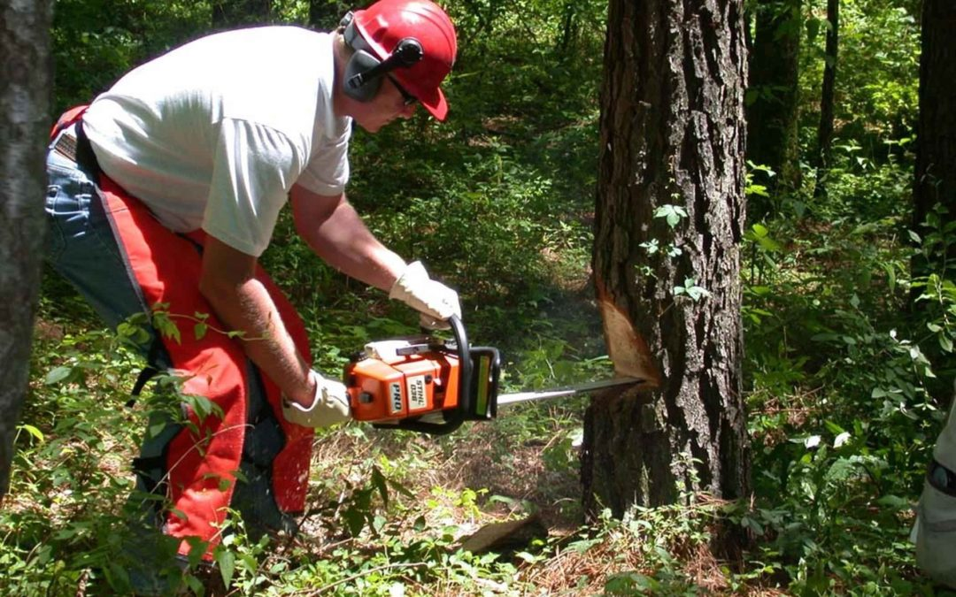 """Featured image for """"Best Two Stroke Oil for Lawn Equipment"""" blog post. Man cutting a tree with a chainsaw."""