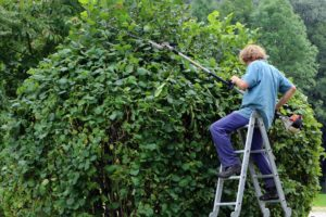 Man using a hedge trimmer.